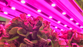 Vertical Farming Picture